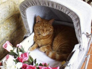 Cat Memorials For The Garden Home Design Ideas And Pictures